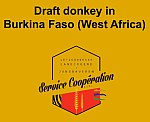 Draft donkey in Burkina Faso